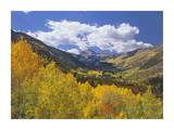 Haystack Mountain with aspen forest, Maroon Bells-Snowmass Wilderness, Colorado Posters by Tim Fitzharris