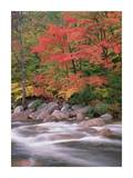 Autumn along Swift River, White Mountains National Forest, New Hampshire Poster by Tim Fitzharris