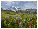 Paradise Meadow and Mount Rainier, Mount Rainier National Park, Washington Posters by Tim Fitzharris