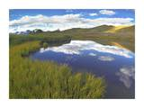 Clouds reflected in water at Cottonwood Pass, Rocky Mountains, Colorado Prints by Tim Fitzharris