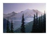 Mt Rainier as seen at sunrise, Mt Rainier National Park, Washington Print by Tim Fitzharris