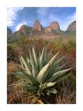 Chisos Agave and the Chisos Mountains, Big Bend National Park, Texas Prints by Tim Fitzharris