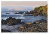 Northern Elephant Seals resting on the beach, Point Piedras Blancas, California Art by Tim Fitzharris