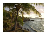 Wilkes Point at sunset with palm trees, Roatan Island, Honduras Prints by Tim Fitzharris