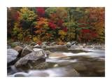 Wild river in eastern hardwood forest, White Mountains National Forest, Maine Posters by Tim Fitzharris