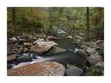 Cedar Creek flowing through deciduous forest, Petit Jean State Park, Arkansas Posters by Tim Fitzharris