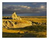 Mule Deer trio in the grasslands of Badlands National Park, South Dakota Art by Tim Fitzharris