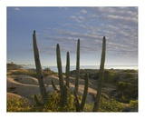 Organ Pipe Cactus overlooking Chelino Bay, Baja California, Mexico Print by Tim Fitzharris