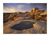 Water that has collected in boulder, Joshua Tree National Park, California Prints by Tim Fitzharris