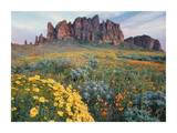 California Brittlebush Lost Dutchman State Park, Superstition Mountains, Arizona Posters by Tim Fitzharris