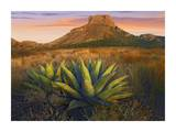 Casa Grande butte with Agave in foreground, Big Bend National Park, Texas Posters by Tim Fitzharris