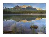 Bow Range and boreal forest reflected in Herbert Lake, Banff National Park, Alberta, Canada Print by Tim Fitzharris
