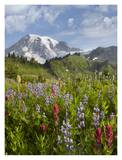 Paradise Meadow and Mount Rainier, Mount Rainier National Park, Washington Prints by Tim Fitzharris