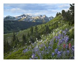 Wildflowers and Tatoosh Range, Mount Rainier National Park, Washington Prints by Tim Fitzharris