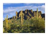 Saguaro cacti and Superstition Mountains at Lost Dutchman State Park, Arizona Posters by Tim Fitzharris