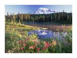 Mt Rainier and wildflowers at Reflection lake, Mt Rainier National Park, Washington Poster by Tim Fitzharris