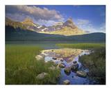 Howse Peak and Mount Chephren, Waterfowl Lake, Banff National Park, Alberta, Canada Posters by Tim Fitzharris
