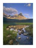 Mount Chephren and Waterfowl Lake, Banff National Park, Alberta, Canada Posters by Tim Fitzharris