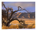 Grasslands and dunes, Great Sand Dunes National Monument, Colorado Posters by Tim Fitzharris