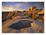 Water that has collected in boulder, Joshua Tree National Park, California Reprodukcje autor Tim Fitzharris