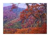 Blue Ridge Range with autumn deciduous forest, near Buck Creek Gap, North Carolina Prints by Tim Fitzharris