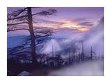 Rolling fog on Clingman's Dome, Great Smoky Mountains National Park, Tennessee Posters by Tim Fitzharris