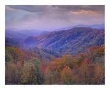 Tim Fitzharris - Autumn deciduous forest, Great Smoky Mountains National Park, Tennessee - Reprodüksiyon