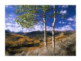 Aspen trees in fall-colors on Elk Mountains, Capitol Creek trailhead, Colorado Prints by Tim Fitzharris
