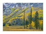 Aspen grove in fall colors, Maroon Bells, Snowmass Wilderness, Colorado Poster by Tim Fitzharris