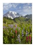 Paradise Meadow and Mount Rainier, Mount Rainier National Park, Washington Poster by Tim Fitzharris