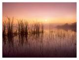 Reeds reflected in Sweet Bay Pond at sunrise, Everglades National Park, Florida Prints by Tim Fitzharris