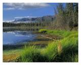 Nutzotin Mountains and boreal forest reflected in receding lake, Alaska Print by Tim Fitzharris