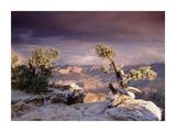 South Rim of Grand Canyon with a dusting of snow, Grand Canyon National Park, Arizona Posters by Tim Fitzharris