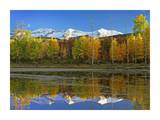 Full moon over East Beckwith Mountain rising above fall colored Aspen forests, Colorado Prints by Tim Fitzharris