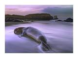 Northern Elephant Seal bull laying at surf's edge, Point Piedras Blancas, California Poster di Tim Fitzharris