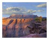 Sandstone cliffs and canyon seen from Toroweap Overlook, Grand Canyon National Park, Arizona Posters by Tim Fitzharris