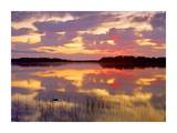 American Alligator surfacing in Nine Mile Pond at sunrise, Everglades National Park, Florida Posters by Tim Fitzharris