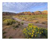 Wildflowers growing along dirt road, Temple of the Moon, Capitol Reef National Park, Utah Prints by Tim Fitzharris
