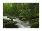 Roaring Fork River flowing through the Great Smoky Mountains National Park, Tennessee Prints by Tim Fitzharris