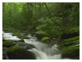 Roaring Fork River flowing through the Great Smoky Mountains National Park, Tennessee Print by Tim Fitzharris