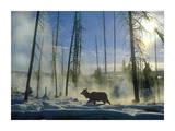 Elk female in the snow with steam rising from nearby hot spring, Yellowstone National Park, Wyoming Prints by Tim Fitzharris