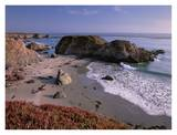 Beach near San Simeon Creek with ice plant in the foreground, Big Sur, California Posters par Tim Fitzharris