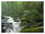 Roaring Fork River flowing through forest in Great Smoky Mountains National Park, Tennessee Prints by Tim Fitzharris