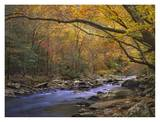 Little River flowing through autumn forest, Great Smoky Mountains National Park, Tennessee Prints by Tim Fitzharris