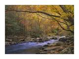 Little River flowing through autumn forest, Great Smoky Mountains National Park, Tennessee Print by Tim Fitzharris
