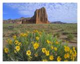Temple of the Sun with Common Sunflowers in the foreground, Capitol Reef National Park, Utah Prints by Tim Fitzharris