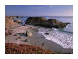 Beach near San Simeon Creek with ice plant in the foreground, Big Sur, California Prints by Tim Fitzharris