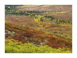 Autumn tundra with boreal forest, Tombstone Territorial Park, Yukon Territory, Canada Prints by Tim Fitzharris