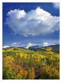 East Beckwith Mountain flanked by fall colored Aspen forests under cumulus clouds, Colorado Prints by Tim Fitzharris