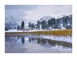 Reeds growing through frozen surface of June Lake, eastern Sierra Nevada, California Posters by Tim Fitzharris